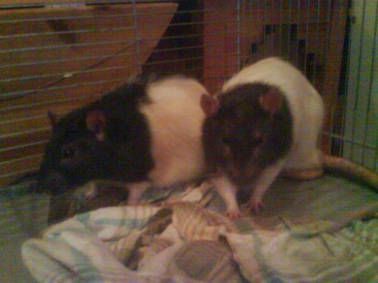 Pépère & Popeye