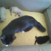 Lara avec ses 3 chatons
