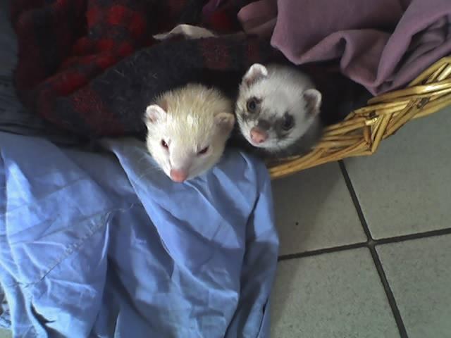 Snoopy avec son nouveau copain Croquette