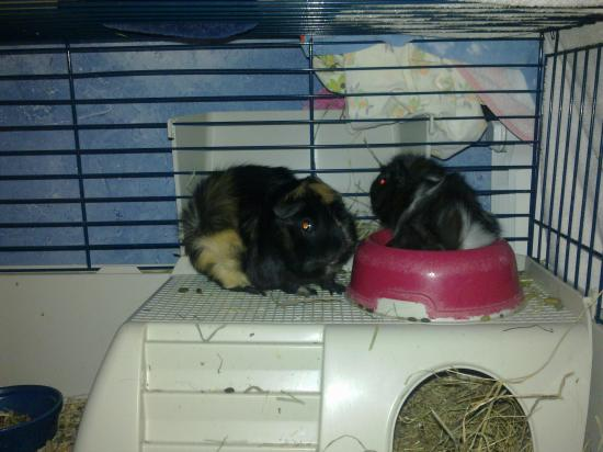 Grisette & son bébé Grisou