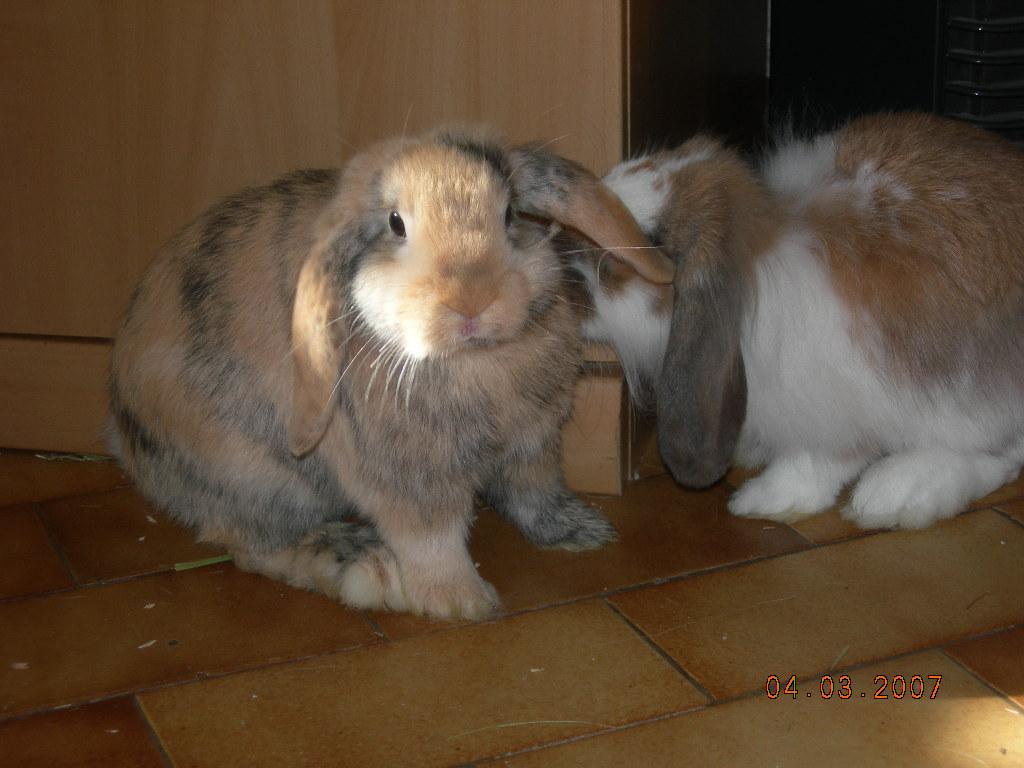 Cassy et Calinette