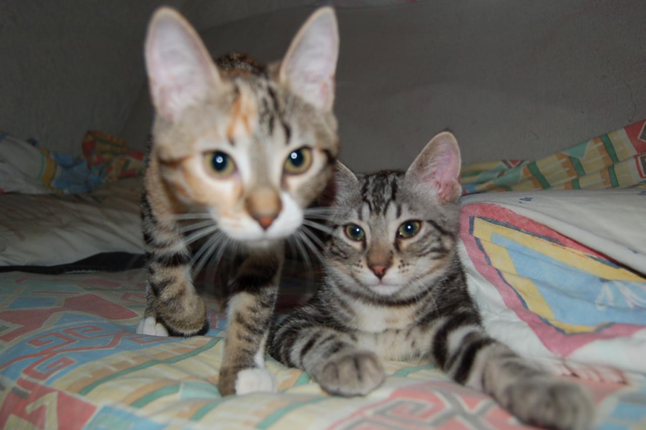 Chelsea et Calvin